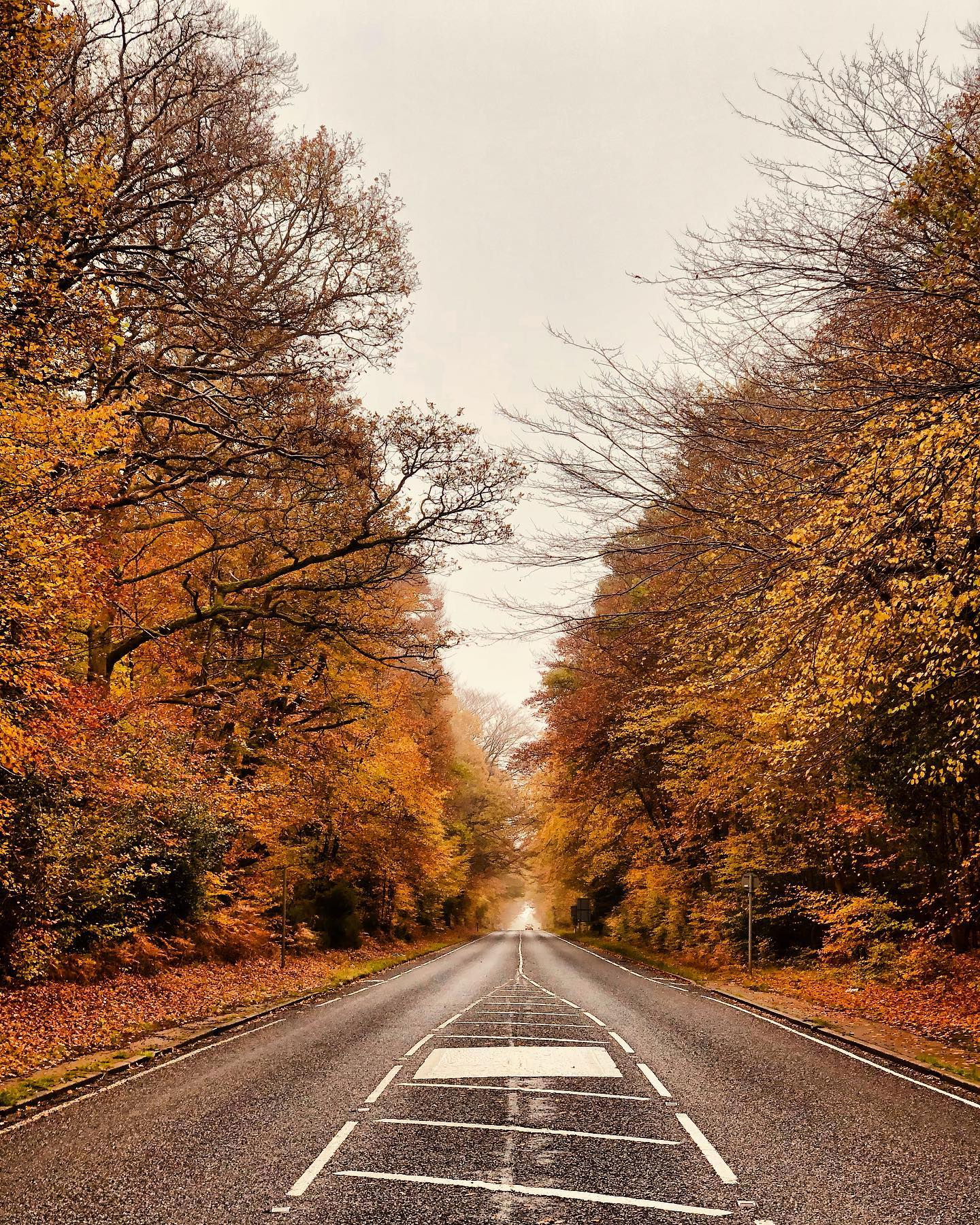 Long drive out of nowhere on my own is always such an exultation! 🍁🍂🍁 #Autumndrive