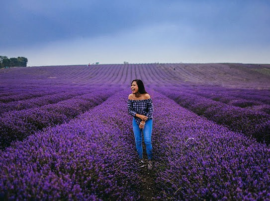 Happiness within! 💜 #hitchinlavenderfields 📸@miksaviso #Secret.London