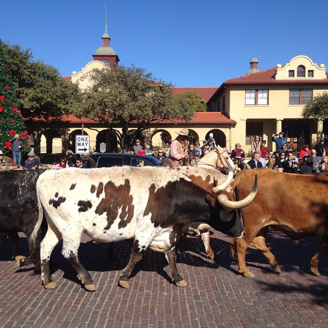 Went to the stockyards today!
