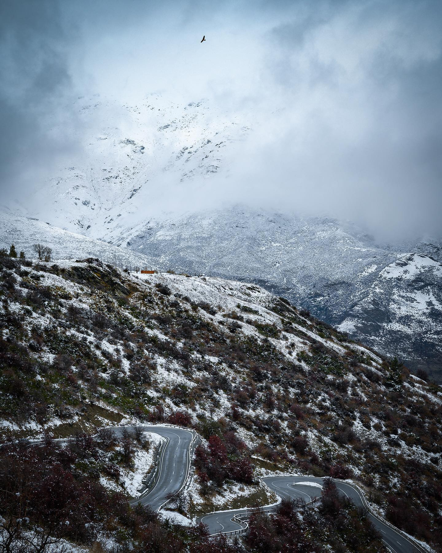 What's better than driving on the highest main road in New Zealand where 4WDs and chains are often required? ❄️🗻Doing it when fresh snow fell over night 😅. The Crown Range road rallies Queenstown to Wanaka and reaches an altitude of 1121 meters, with great views all around. For this one shot, I had to scramble for the camera as a NZ native Kahu (Swamp Harrier 🦅) was in the perfect spot over the twisting scenic road.  . . . . . #queenstown #queenstownlive #walterpeak #nzmustdo #purenewzealand #exploremore #ignewzealand #nzgeophoto #nz #nouvellezelande #nztravel #nzgeo #nikonnz #queenstownnz #southisland #nzlandscapes #discovernz #southernalps #kahu #swampharrier #nznative #nznativebirds #nzlandscapephotography #nztravelmagazine #arrowtownnz #wanaka #crownrangeroad #nzroadtrip